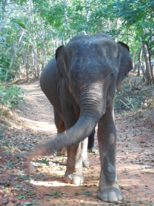 Nong Lek enjoying her walk in the forest.