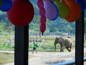 Party balloons with Mae Do heading for her shelter for the evening.